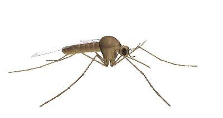 Crea tu propio repelente de mosquitos.