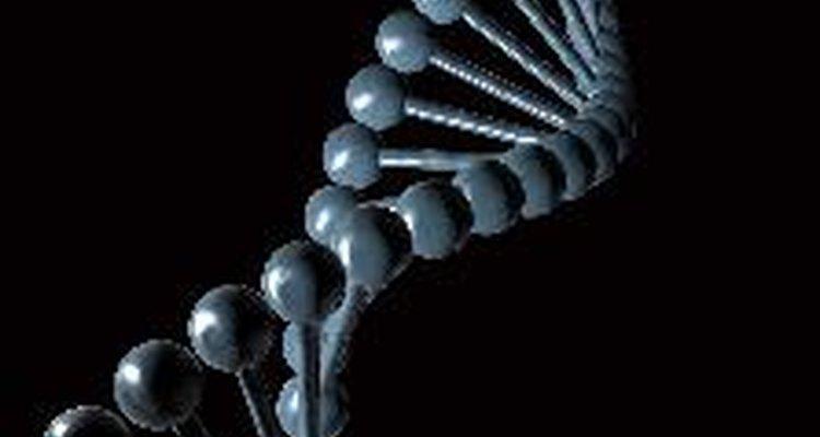 Los cromosomas contienen una huella genética que determina características.
