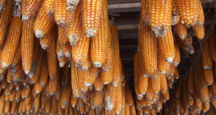 Los pequeños granjeros de África están plantando menos maíz y más mandioca debido a que esta es menos susceptible a la sequía.