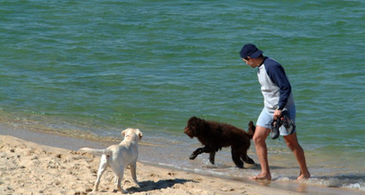 Exercício: um cão cansado não come papel higiênico