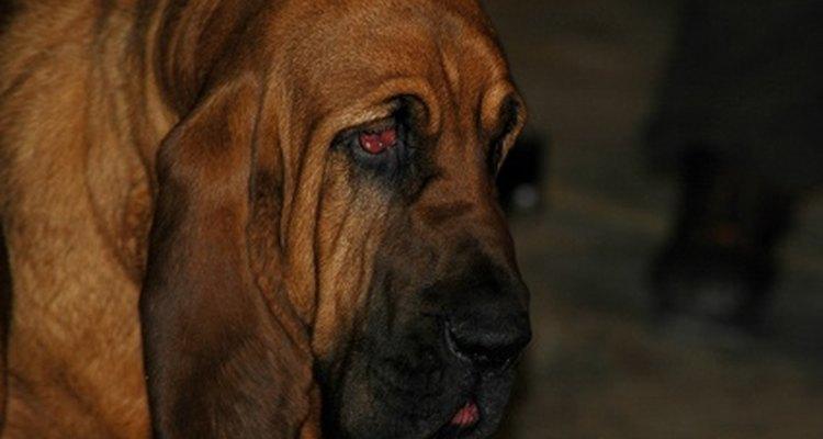 El babeo excesivo de tu perro puede obedecer a múltiples razones.