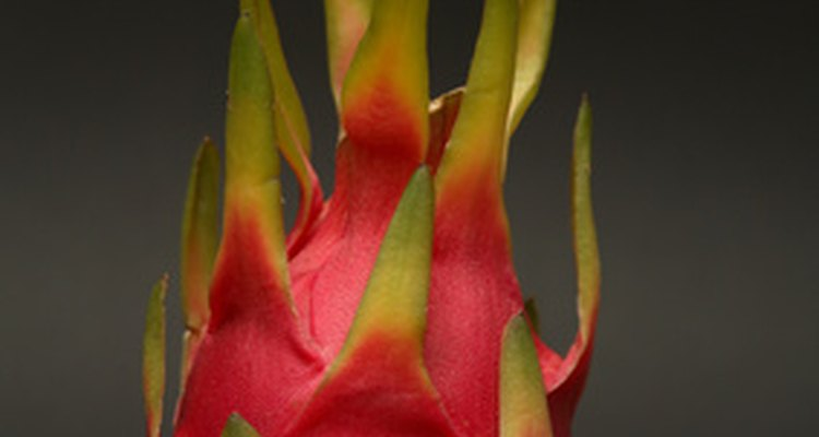 A pitaia se desenvolve depois que a planta floresce.