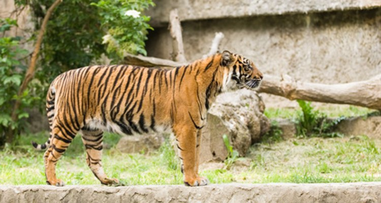Animal curators help to obtain animals for zoo exhibits.