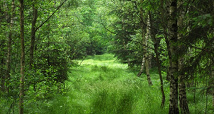 Europe's forests make up 25 per cent of the Earth's natural forests.