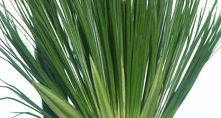 Los egipcios se reunían en los tallos de las plantas para hacer papel de papiro.