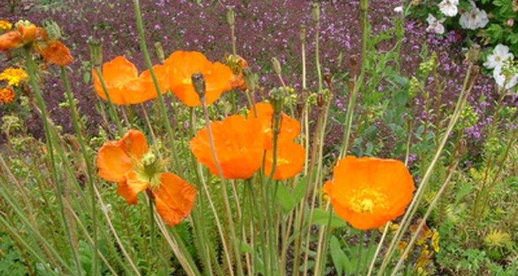 Las flores silvestres son una manera brillante y fácil de transformar un patio.
