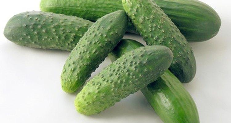 Cultiva pepinos.