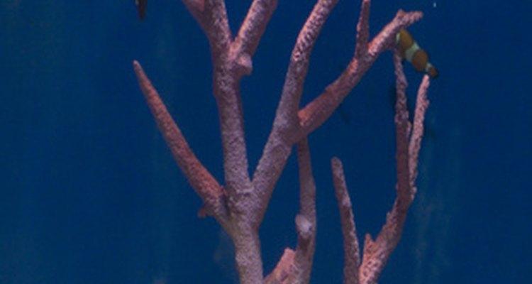 Wood may introduce fungus to an aquarium.