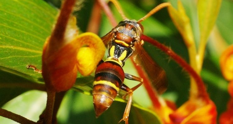 The flowers of some plants can deter wasps from nesting near a residence.