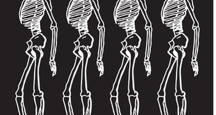 Modelos de esqueleto podem ser feitos em casa.