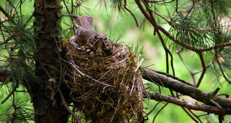 Tenha cuidado ao remover os ovos do ninho