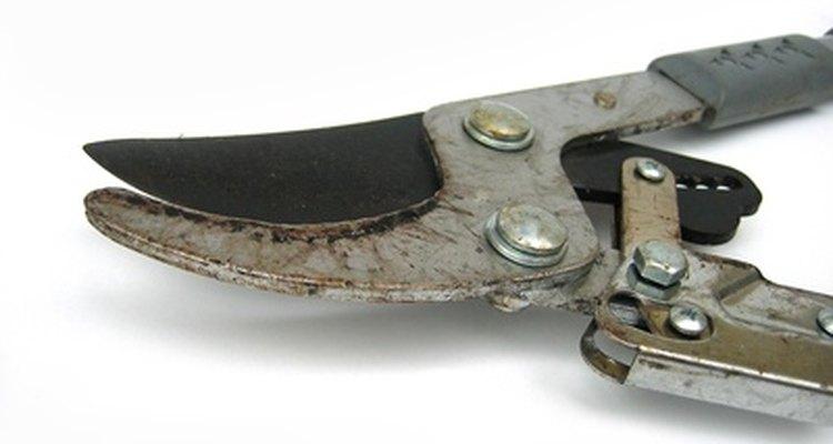 Mantener tus tijeras de poda funcionando correctamente requiere un mantenimiento regular.