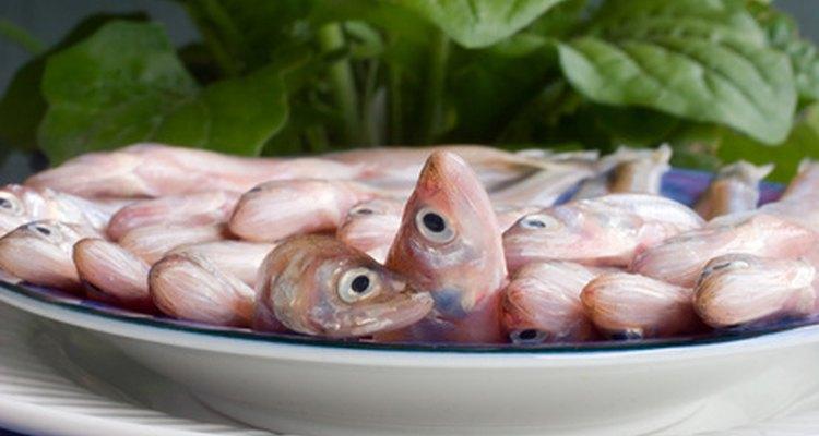 Osmerus são alguns dos peixes mais populares para usar como isca