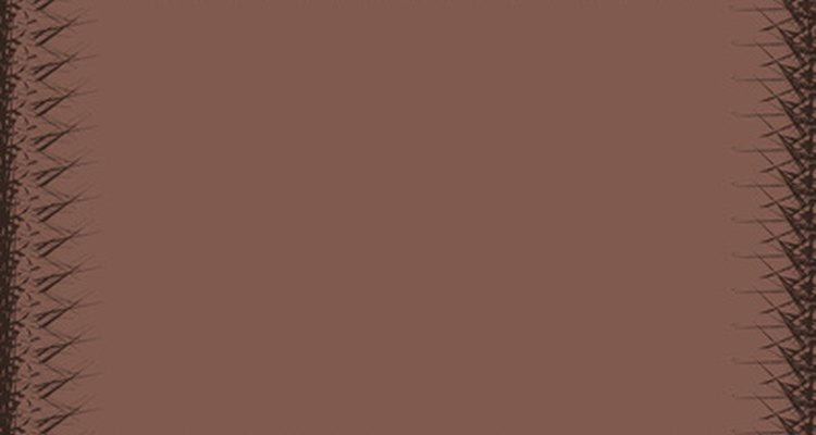 El marrón oscuro combina muy bien con unos zapatos de color caramelo.