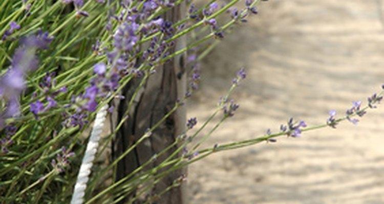 Many varieties of flowers grow along roadsides.