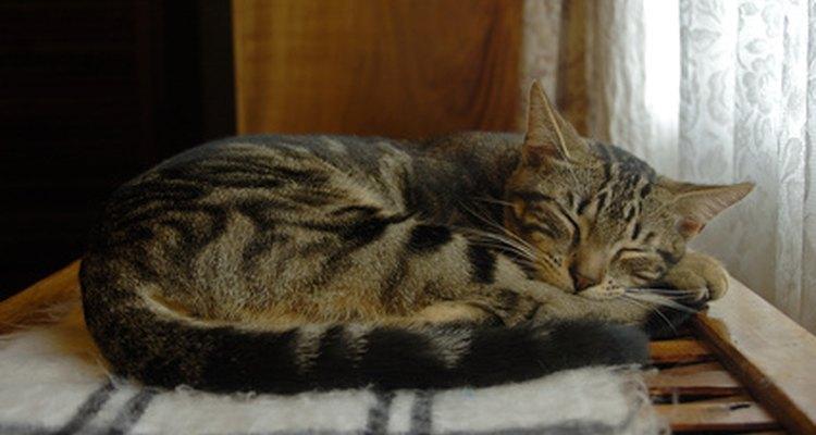 Reduza o estresse na vida do seu gato para ajudar a aliviar a cistite
