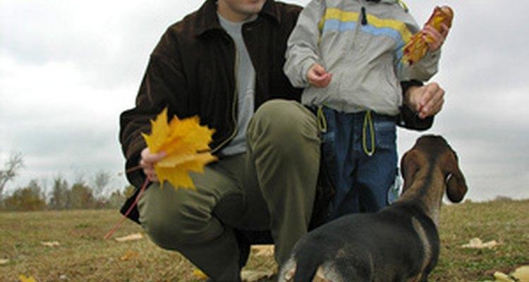 Un perro actúa a menudo aletargado cuando los niños comienzan la escuela.
