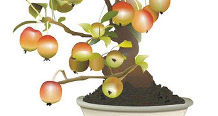 Los bonsáis frutales producen algunos frutos anualmente.
