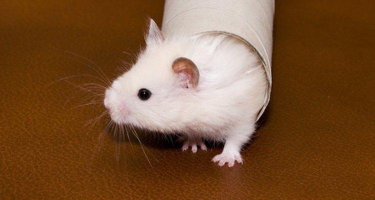 Los animales de laboratorio son más sensibles a los ultrasonidos que los animales salvajes.