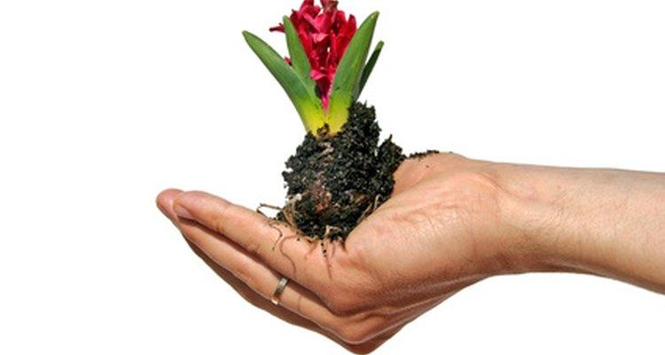 As estufas possibilitam o cultivo de plantas dentro de casa