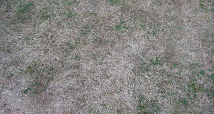 A grama de seu quintal pode morrer por vários motivos