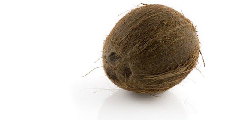 Os três olhos são visíveis na extremidade do coco