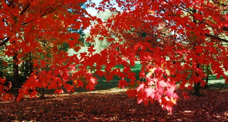 Consider red-leafed trees for a splash of colour.