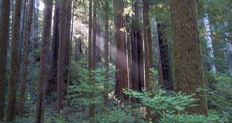Camp Recovery se encuentra en los bosques de secuoyas de Santa Cruz.