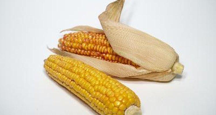 Desgranar maíz puede ser una actividad divertida para ti y tu familia.
