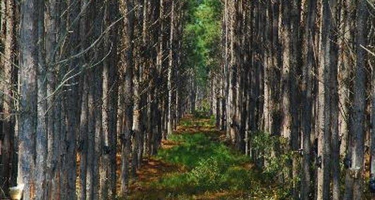 A Selva do espinhaço é uma área importante para os jogadores que querem subir de nível