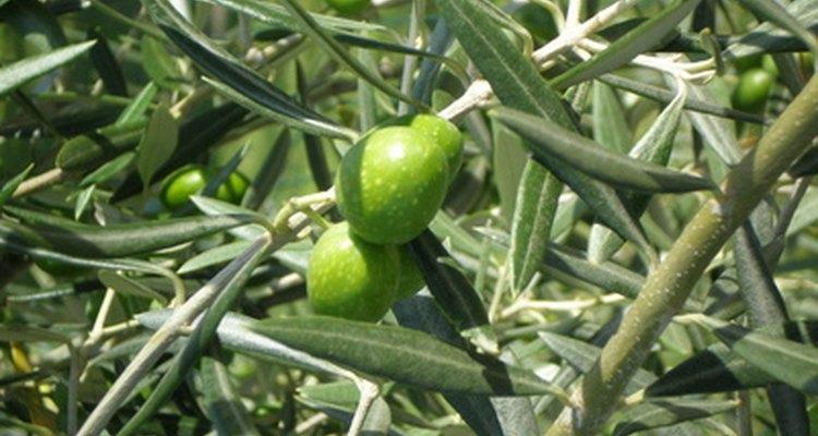 Todos esses verdes são variações de verde oliva. Você terá que decidir qual é a cor correta enquanto mistura