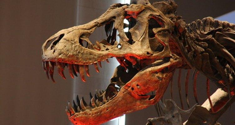El primer fósil de un ave se encontró en la Patagonia Argentina.
