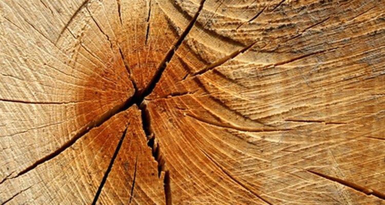 Los anillos dentro del núcleo te ayudarán a conocer la edad de un árbol.