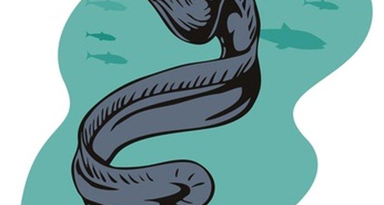 La anguila es rica en vitamina y se puede preparar de una variedad de maneras diferentes.