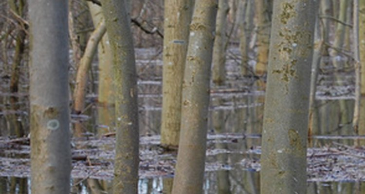 Las lluvias fuertes que caen sobre campos antiguos pueden resultar en peligros ambientales.