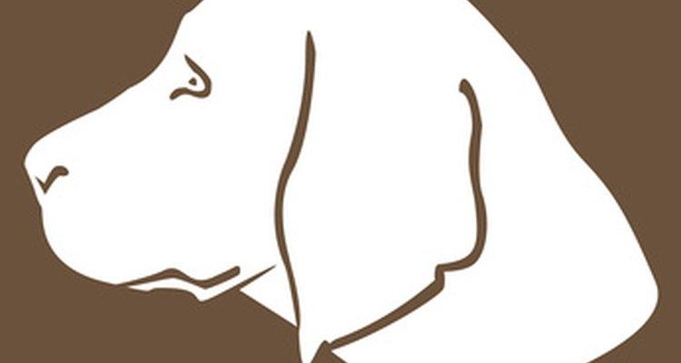 La nistatina es un antifúngico que puede ser usado en perros en forma oral o tópica.