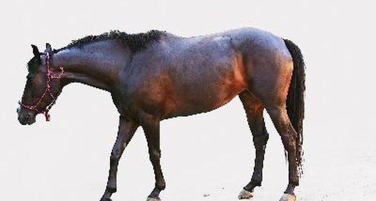 Alimenta a tu caballo con una preparación casera.