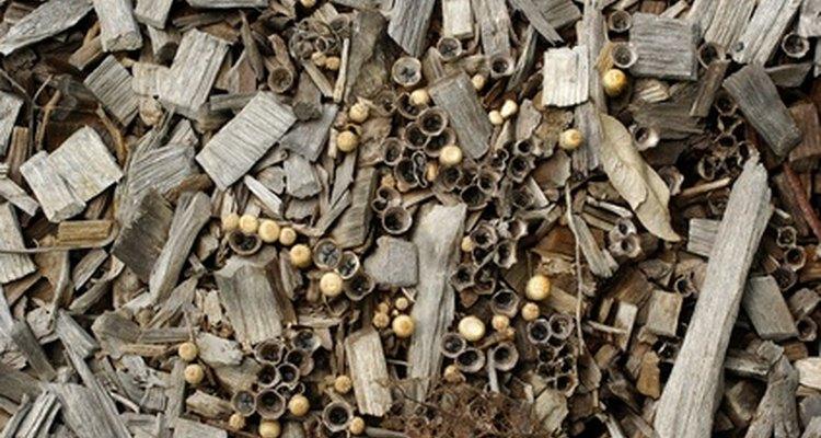 Los árboles de pino añaden ácidos y taninos a la tierra.