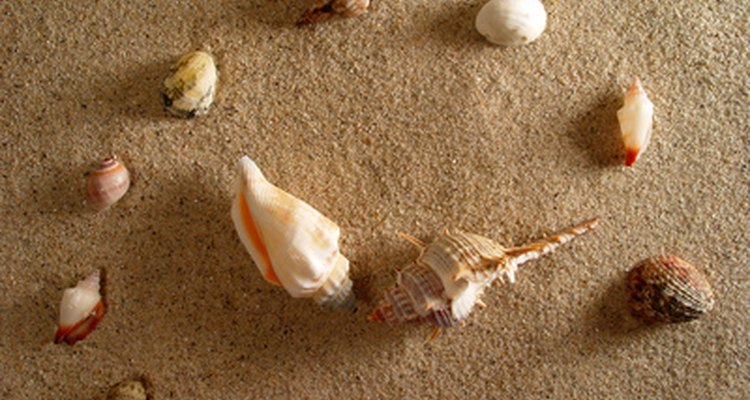 Glue shells to canvas in a shape or letter design.