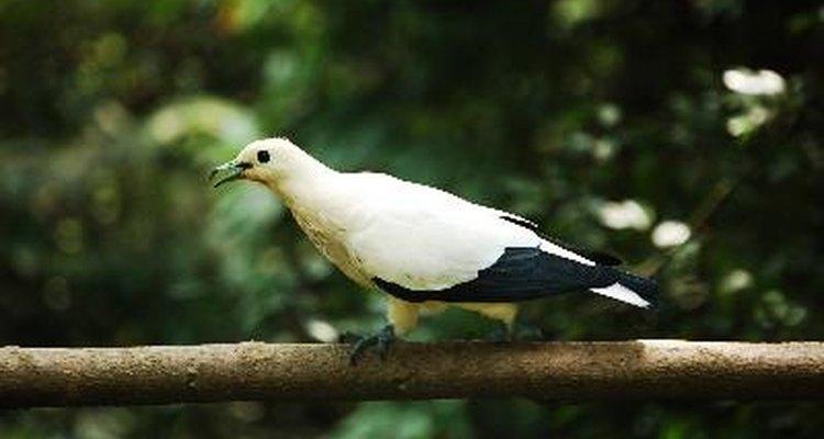 Ajude seu pássaro a se recuperar alimentando-o com suplementos desintoxicantes