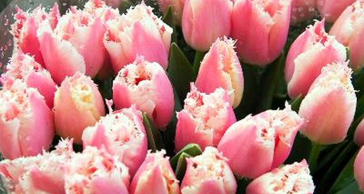 Armazene flores no refrigerador
