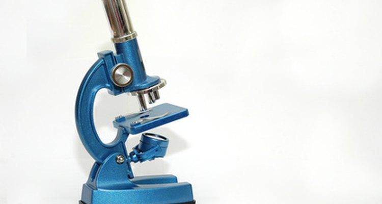 Compound microscopes are common in laboratories.