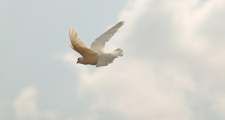 A pomba branca representa a paz