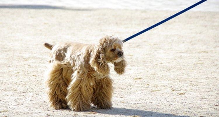 Perro con correa.