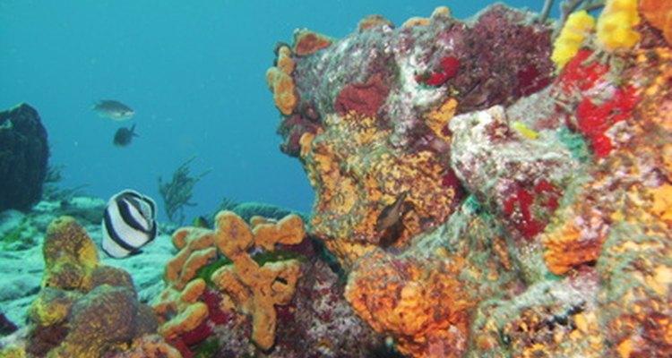 Dar uma foto emoldurada da impressionante Great Barrier Reef