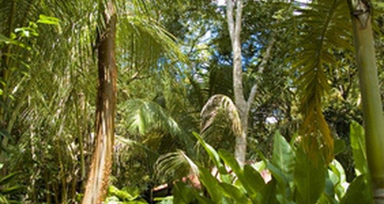 Machetes were used to help traverse jungle terrain.
