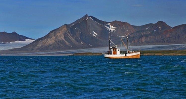 Pocas plantas pueden sobrevivir en el Ártico.