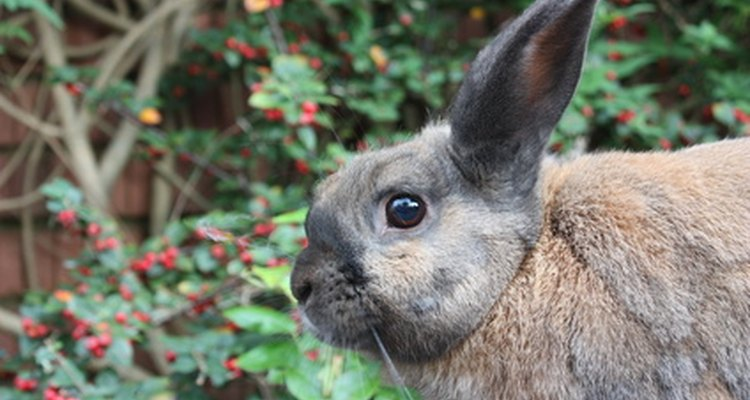 Los conejos devoran mucho en tu jardín, pero hay algunas plantas que no tocarán.