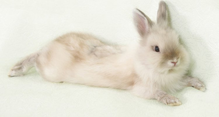 Angora rabbit wool is soft, warm and odourless.