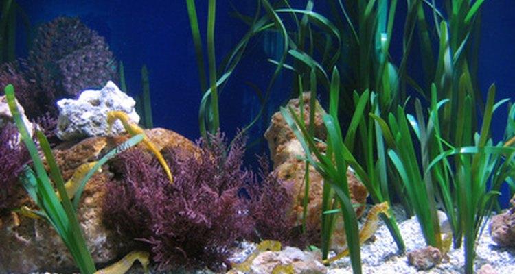¿Puedo usar vinagre en un acuario?